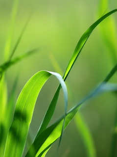 nature-free-mobile-phone-wallpaper-240x320